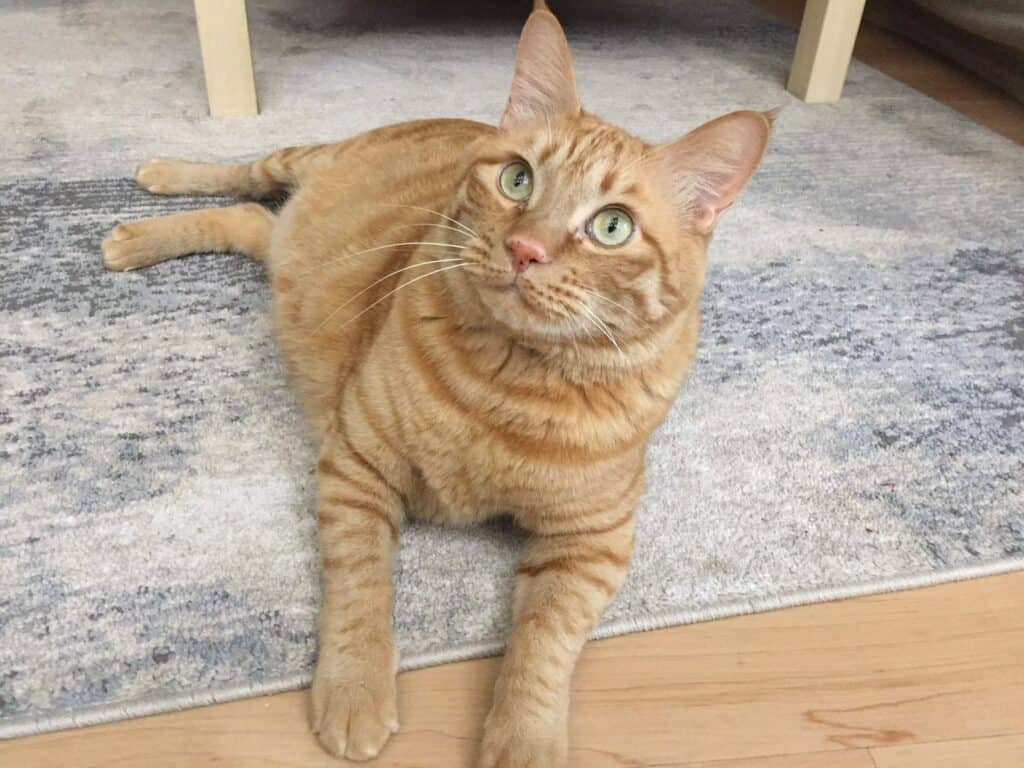 Pets Inc Vancouver Cat Sitting & In Home Animal Nursing